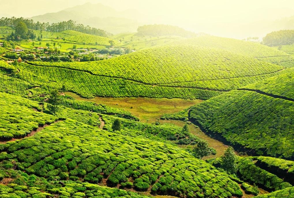 Hot Tea and Maggie while Trekking the Mountains Munnar Tripazzi