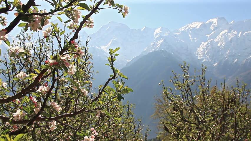apple Himachal Tripazzi